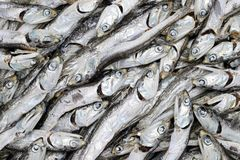 Close up of dried small fish Royalty Free Stock Photo