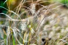 Close-up of dried wild herbs on a countryside meadow. Medicinal plants. Dry grass. Depth of field bokeh stock photos
