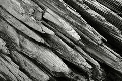 Close-up of driftwood. Close-up of drift wood in black and white Royalty Free Stock Images