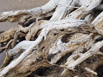 Close up driftwood tree root Royalty Free Stock Images
