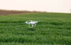 Drone flying above green crop field. Close up of drone flying above green wheat field in summer. High technology innovations for increasing productivity in Royalty Free Stock Image