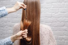 Close-up drop oil restore and recovery hair is applied to head bulbs. Concept hairdresser spa salon.  stock photo