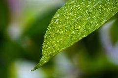 Droplets of green leaf Royalty Free Stock Photos