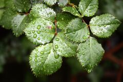 Close up of droplets on leaf  Stock Photos