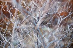 Close up of dry branch tree, macro texture of a grey dry bush royalty free stock photo