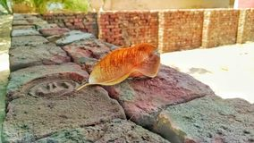 Close up of a dry brown leaf on a wall stock images