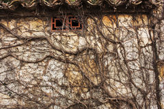 Close up dry creeping branches on brick old wall Stock Image