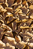 Close-up of dry desert earth. In sunlight with shadows Stock Images