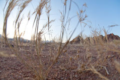 Close-up of dry desert grass Royalty Free Stock Photography