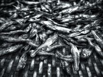 Close up of dry fish on a bamboo woven tray in black and white.