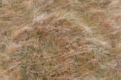 Close-up of dry grass. Brown,dry filling frame, background horizontal or vertical Stock Photo