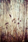 Close-up of dry grass in the frost and shadow on snow Stock Images