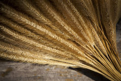 Close up of dry grass seed bouquet on wood background Stock Images