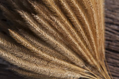 Close up dry grass seed bouquet on wood with beautiful light use Stock Photo