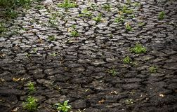 A dried river. Close-up a dry ground with big cracks Royalty Free Stock Photo
