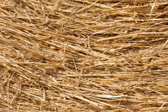 Close-up of dry hay Royalty Free Stock Photos