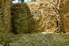 Close-up of hay Stock Photography