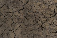 Close-up. dry land. in the center of the trail of the animal. Background pattern texture nature desert dirt crack soil drought earth sand clay erosion geology stock photos