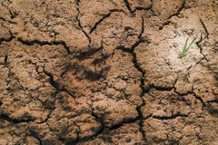 Close-up. dry land. in the center of the trail of the animal. Background pattern texture nature desert dirt crack soil drought earth sand clay erosion geology royalty free stock photo
