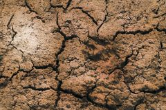 Close-up. dry land. in the center of the trail of the animal. Background pattern texture nature desert dirt crack soil drought earth sand clay erosion geology stock photography