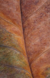 Close up of dry leaf pattern Royalty Free Stock Photos