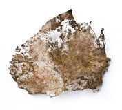 Close-up of dry leaf Royalty Free Stock Photography