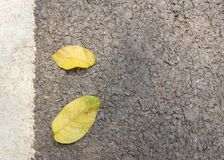 Close up dry leaves on cement floor royalty free stock images