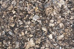 Dry leaves on ground in autumn garden Royalty Free Stock Image