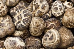 Close up dry mushrooms Stock Photos