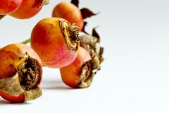 Dry rose hips against a white background royalty free stock image