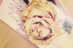 Close up of dry rose and old postcard. Soft light vintage style Stock Photos
