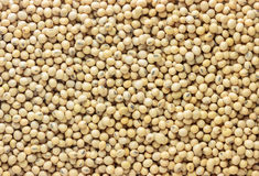 Close up dry soy bean as background. Royalty Free Stock Image
