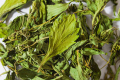 Close up dry stevia leaves Stock Photo