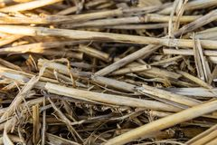 Close up of dry straw background texture stock photography