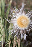 Close up of dry thistle underbrush Stock Image