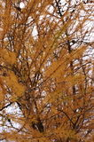 Close up of Dry Tree Royalty Free Stock Images
