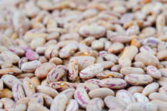 Close-up dry white beans Stock Photo