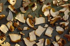 Close up of dry white mushroom boletus edulis slices stock photography