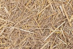 Close up of dry yellow straw grass background texture after have. Close up of dry yellow straw grass background texture stock image