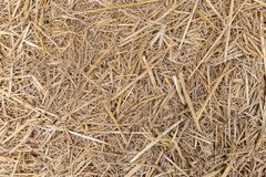 Close up of dry yellow straw grass background texture after have. Close up of dry yellow straw grass background texture stock images