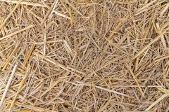 Close up of dry yellow straw grass background texture after have. Close up of dry yellow straw grass background texture royalty free stock photos