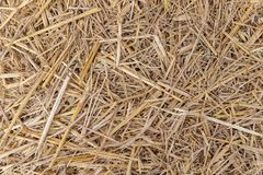 Close up of dry yellow straw grass background texture after have. Close up of dry yellow straw grass background texture stock photos