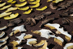 Close up of drying cut mushrooms on net dryer background. Heap of natural dried sliced boletus mushrooms for suop Royalty Free Stock Photography