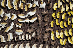 Close up of drying cut mushrooms on net dryer background. Heap of natural dried sliced boletus mushrooms for suop Stock Images
