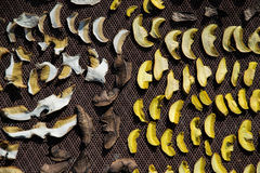 Close up of drying cut mushrooms on net dryer background. Heap of natural dried sliced boletus mushrooms for suop Stock Photography