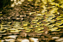 Close up of drying cut mushrooms on net dryer background. Heap of natural dried sliced boletus mushrooms for suop Royalty Free Stock Images