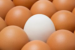 Duck egg among chicken eggs Royalty Free Stock Images