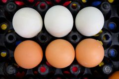 Close up of duck eggs and chicken egg Stock Photography