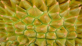 Close up durian for background Royalty Free Stock Images