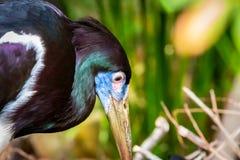 Close up e tiro detalhado do pássaro bonito e colorido de florida fotos de stock
